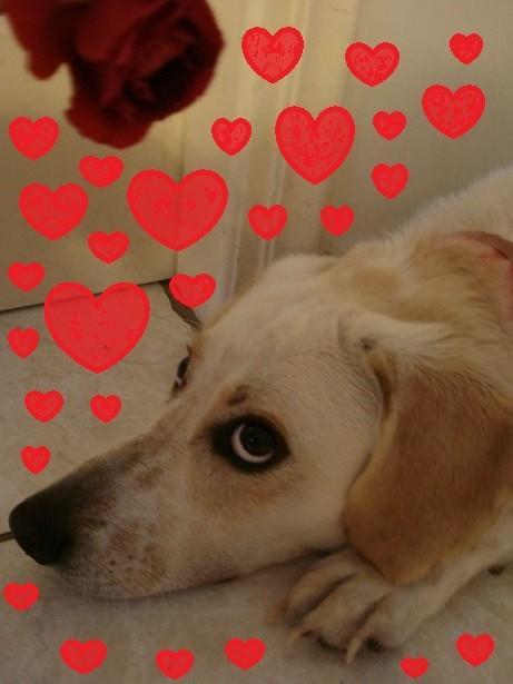Oscar in love