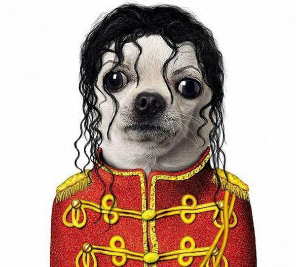celeb animals05 Pets Impersonating Famous Celebrities