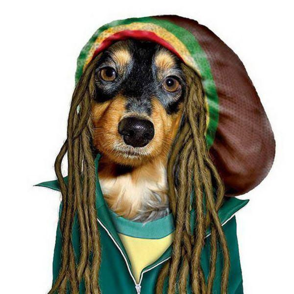 celeb animals12 Pets Impersonating Famous Celebrities