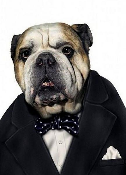 celeb animals33 Pets Impersonating Famous Celebrities