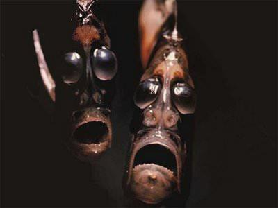deep_sea_hatchetfish