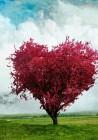 ♥ Αγάπη είναι . . . ♥