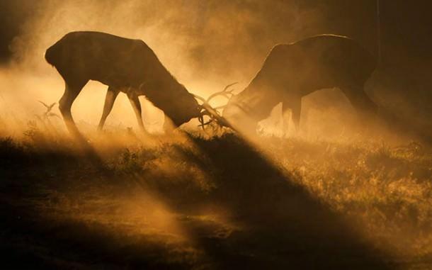 British Wildlife Photography Contest (12)