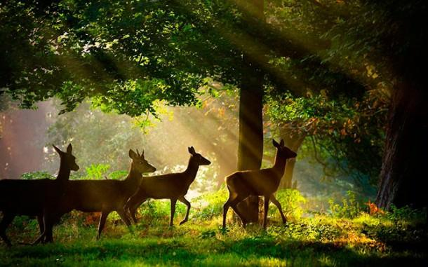 British Wildlife Photography Contest (13)