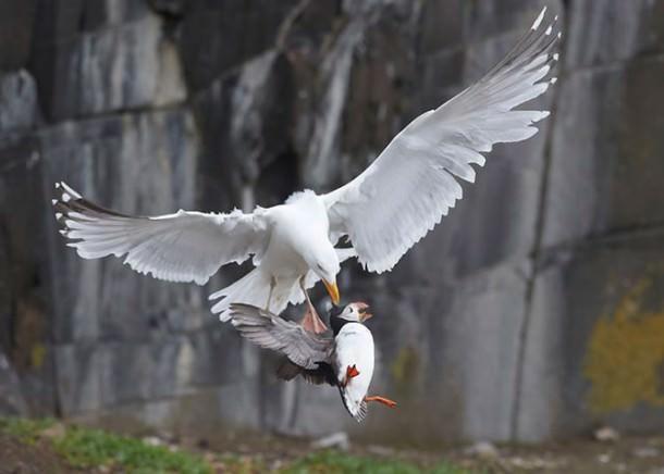 British Wildlife Photography Contest (15)