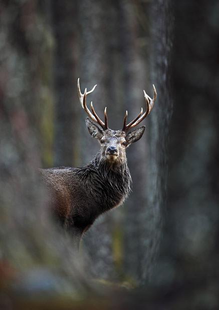 British Wildlife Photography Contest (19)