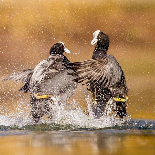 British Wildlife Photography Contest (23)