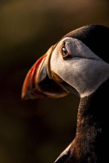 British Wildlife Photography Contest (7)