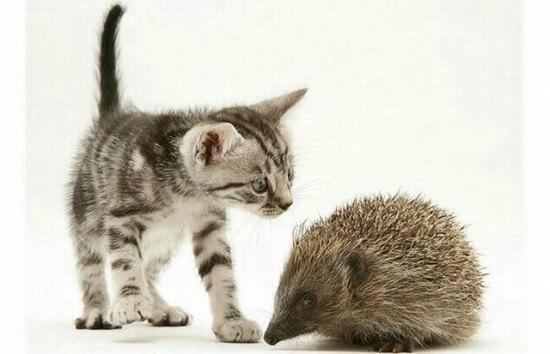 Χαριτωμένα Γατάκια