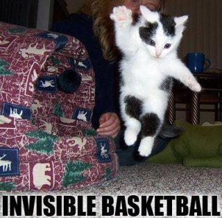 Invisible Basketball Cat Funday.gr