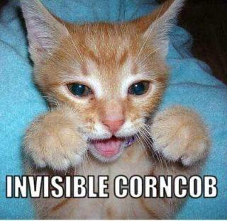Invisible Corncob Cat Funday.gr