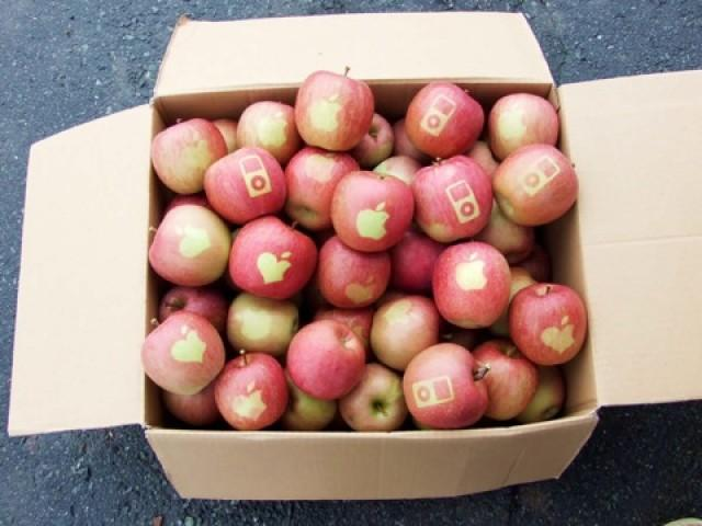 Apples With Apple Logo 02 E1350804710552