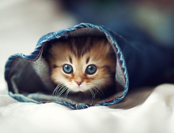 Cutest Little Kitten 16