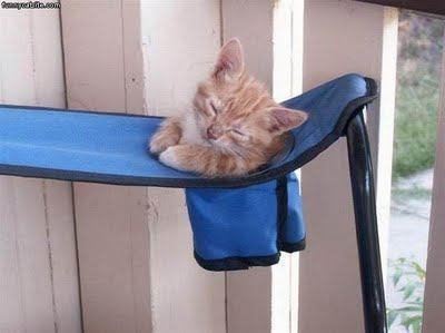 Kitten In Cup Holder
