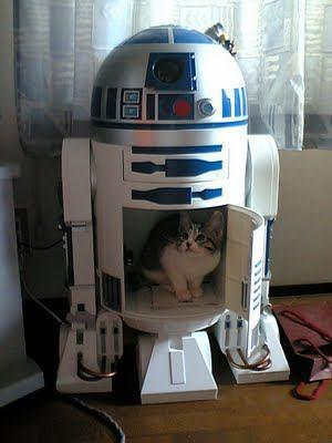 Kitten R2d2