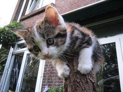 Kitten Trunk