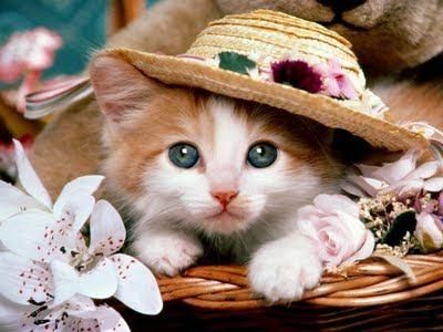 Kitty Pic 2