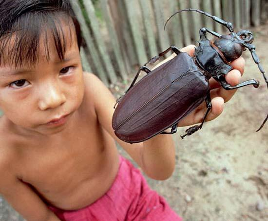 Largest Insects 07