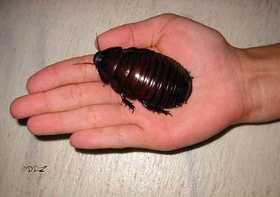 Largest Insects 14