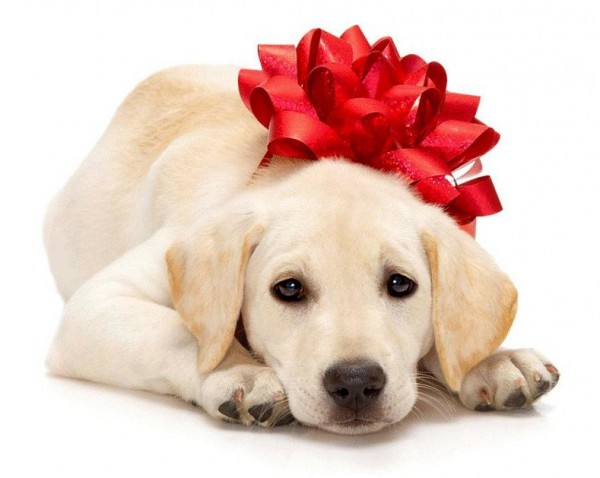 Puppy With Red Bow