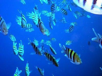 Έχουν τα ψάρια όπισθεν;