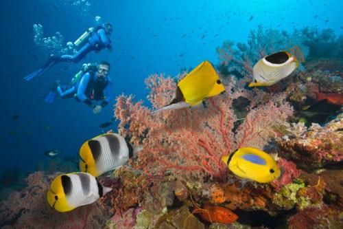 Δύτες στο Μεγάλο Κοραλλιογενές Φράγμα της Αυστραλίας ((c) Jeff Hunter/Photographer's Choice RF/Getty Images)