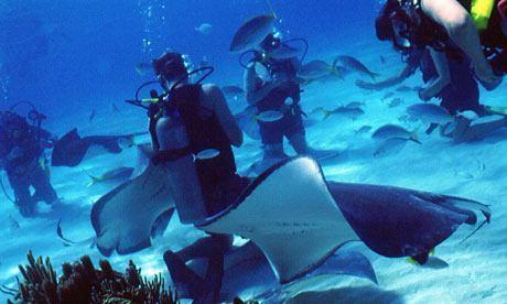 Divers At Stingray City 001