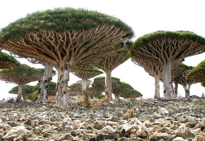 Socotra 10
