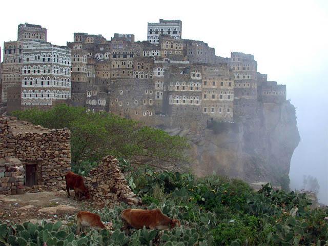 Socotra 11