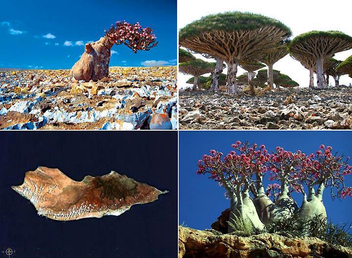 Socotra 4