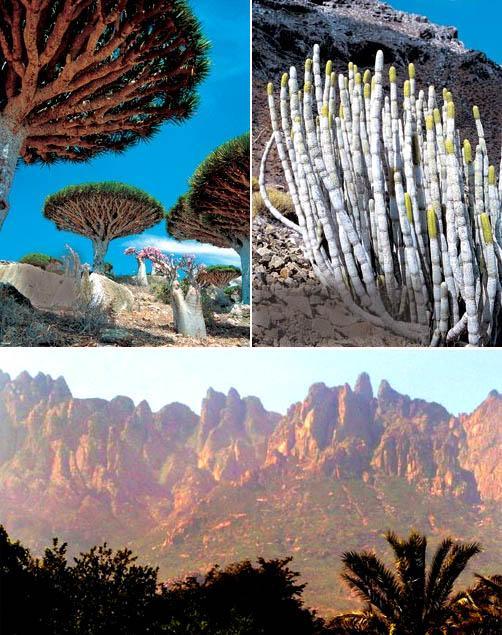Socotra 5