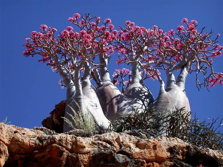 Socotra 9