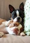 10 αξιολάτρευτες φωτογραφίες ζώων