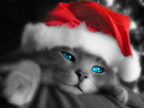 Kitty Santa Wallpapers 4342 1024x768