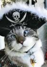 Ο αλλήθωρος γάτος που έγινε σταρ του Internet