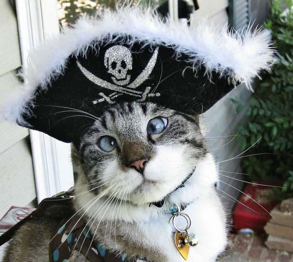 spangles-allithwros-gatos