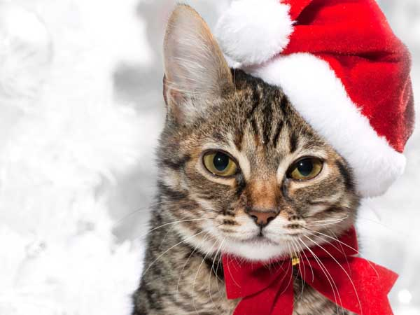 New_Year_wallpapers_Christmas_cat