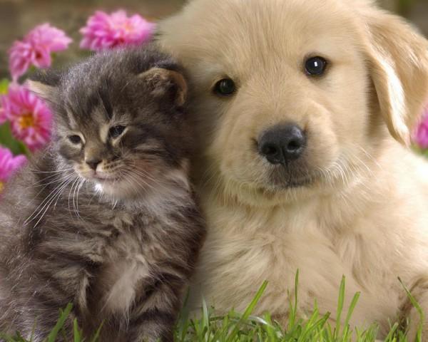 Puppy And Kitten2 600x480