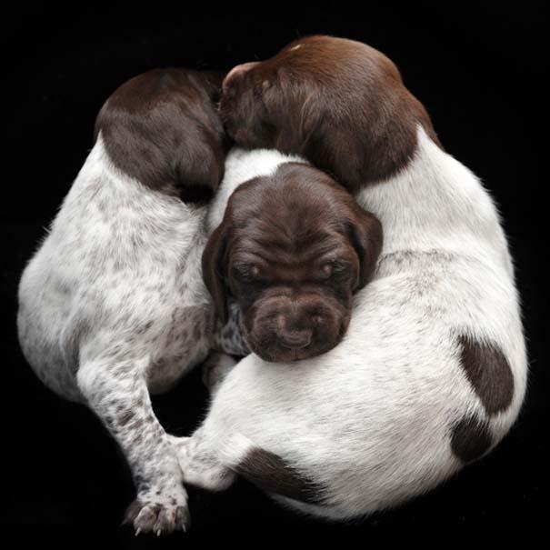 Κουτάβια από διάφορες ράτσες σκύλων (6)