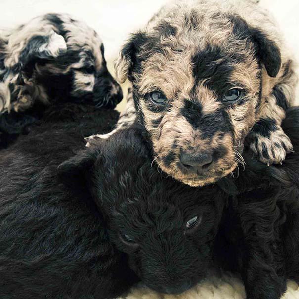 Κουτάβια από διάφορες ράτσες σκύλων (11)