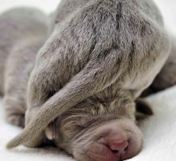 Κουτάβια από διάφορες ράτσες σκύλων (14)