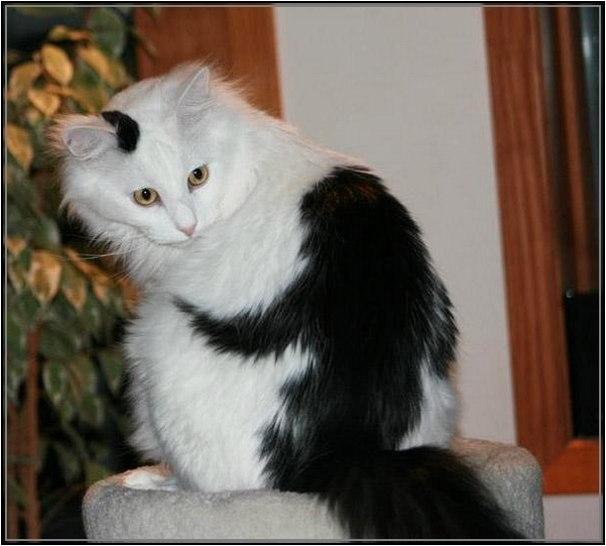 cats-11