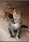 10 γάτες που έγιναν διάσημες για τις απίστευτο τρίχωμα τους