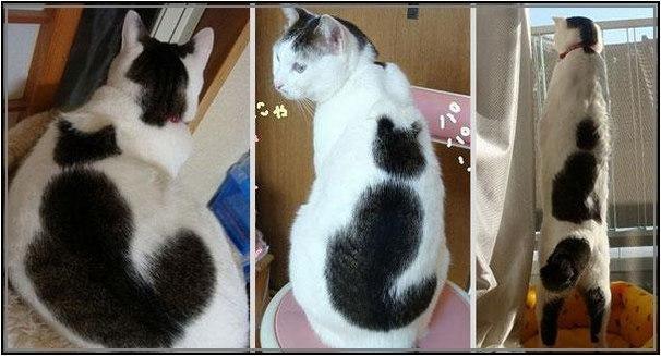 cats-6