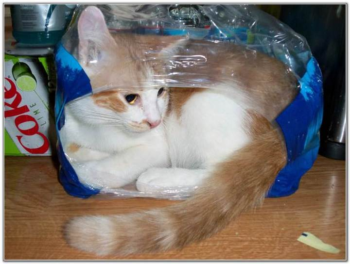 cat-and-bags-02