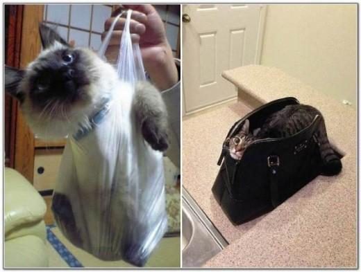 Cat And Bags 03