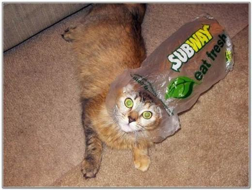 Cat And Bags 05