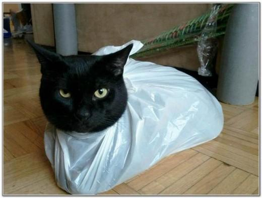 Cat And Bags 07