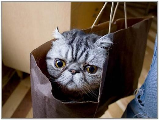 Cat And Bags 09