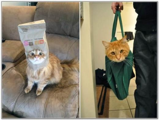 Cat And Bags 10